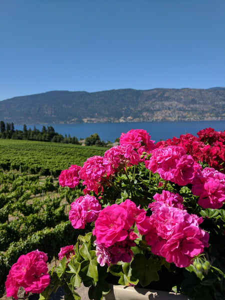 North Kelowna Wine Tour - Lake Country