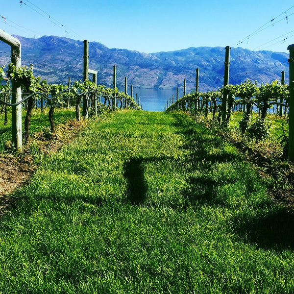 West Kelowna Wine Tour