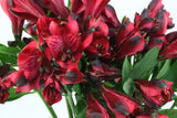 Alstroemeria (Red) - Pack of 120 stems - ifloral.com