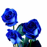 Bulk Blue Roses (Pack of 100 stems) - ifloral.com