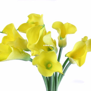 Standard Calla Lily (Yellow) - Pack of 40 stems - ifloral.com