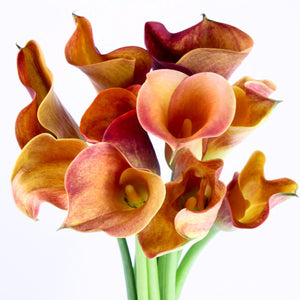 Standard Calla Lily (Hot Shot Orange) - Pack of 40 stems - ifloral.com