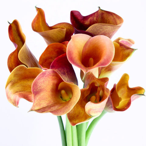Standard Calla Lily (Hot Shot Orange) - Pack of 40 stems