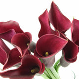 Standard Calla Lily (Red Passion) - Pack of 40 stems - ifloral.com