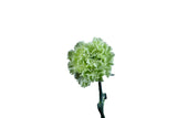 Fancy Green Standard Carnations Wholesale, Fancy Grade (Pack of 150 stems) - ifloral.com