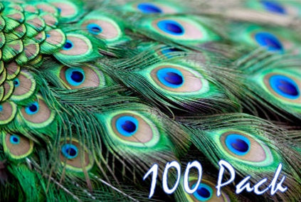 Natural Peacock Feathers, 30