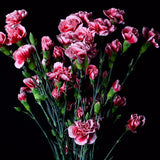Scarlette Elegance Novelty Mini Carnations (Pack of 120 stems) - ifloral.com