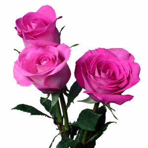 """Attache"" Pink Roses (Pack of 100 stems) - ifloral.com"