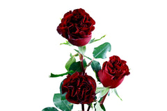 """Hearts"" Wholesale Red Roses (Pack of 100 stems) - ifloral.com"