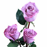 """Moody Blues"" Lavender Roses (Pack of 100 stems) - ifloral.com"