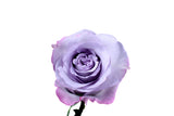 """Purple Haze"" Lavender Roses (Pack of 100 stems) - ifloral.com"