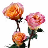 """Free Spirit"" Orange Roses (Pack of 100 stems) - ifloral.com"