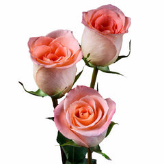 """Donna"" Peach Roses (Pack of 100 stems) - ifloral.com"