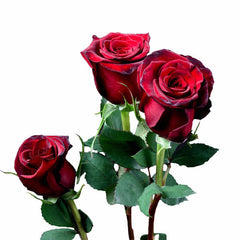"""Red Paris"" Red Roses (Pack of 100 stems) - ifloral.com"