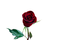 """Black Magic"" Red Roses (Pack of 100 stems) - ifloral.com - 4"