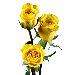 """Yellow Moon"" Yellow Roses (Pack of 100 stems) - ifloral.com"