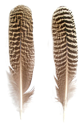 Mottled Peacock Wing Quills 7-10 - Per Pair