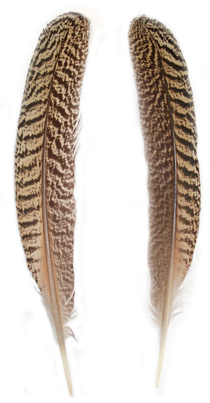 Mottled Peacock Wing Quills 10