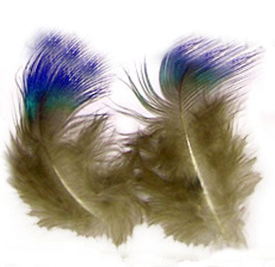 Washed Blue Peacock Body Plumage - Per Pound