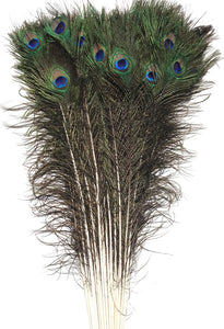 "Eyed Peacock Sticks 30-35"" Natural - Per 100"