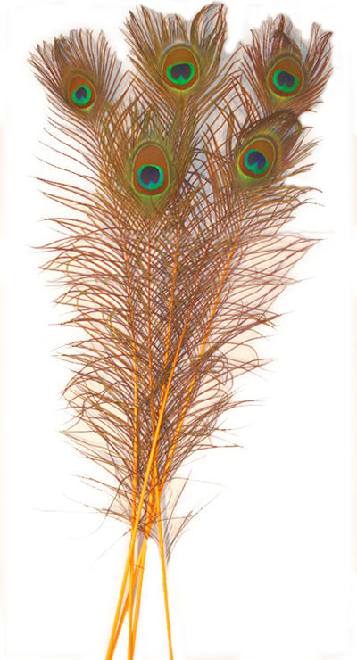 Eyed Peacock Sticks 30-35