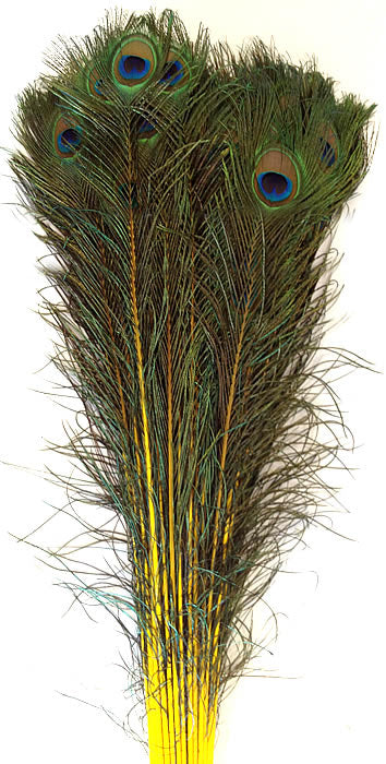 Eyed Peacock Sticks 35-40