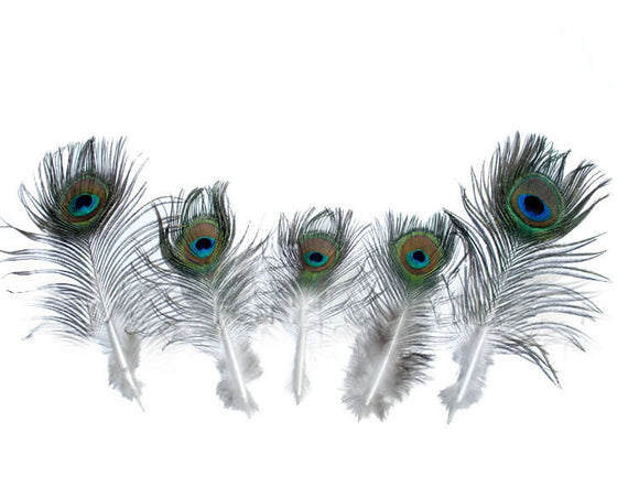 Small Peacock Eyes 5-10