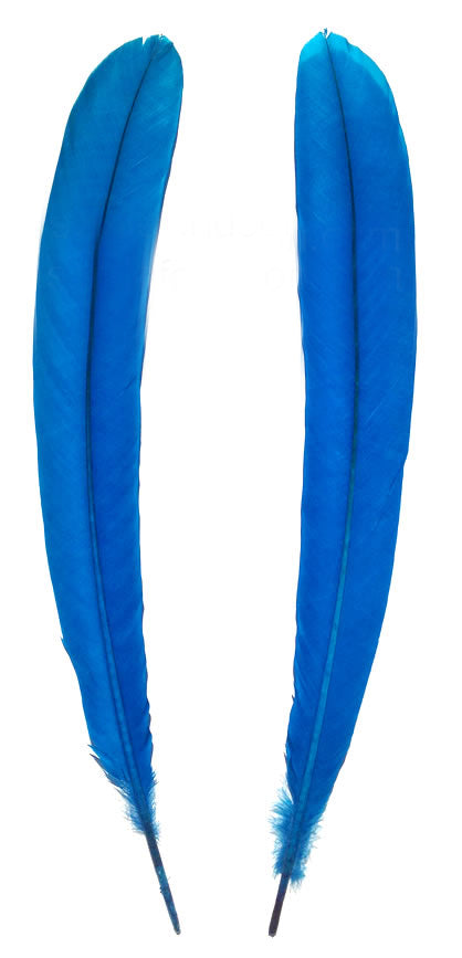 Peacock Tail Support Feathers 18-24
