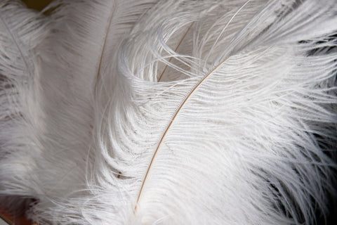 White Ostrich Feathers, 17