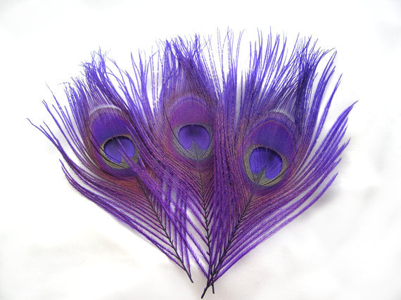 Small Dyed Purple Peacock Feathers, 10