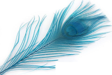 Small Dyed Turquoise Peacock Feathers, 10