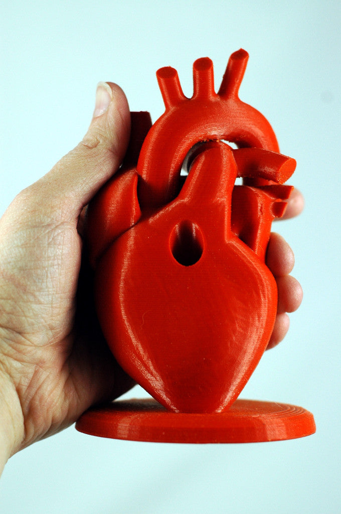 3D Print Anatomical heart pencil holder red filament-human heart size