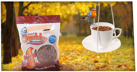 WIn a Tea Cup & Saucer Bird Feeder and a 500g bag of Chubby Mealworms