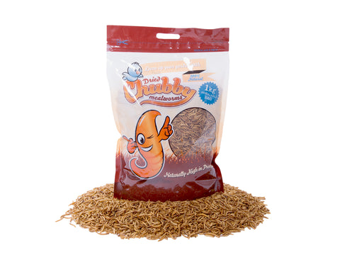 1Kg Dried Chubby Mealworms (Temporary in Clear Bags)