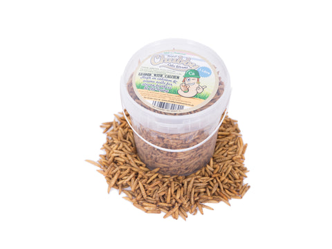 1 Litre Chubby Dried Black Soldier Fly Larvae