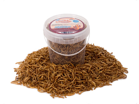 1 Litre Chubby Dried Mealworms