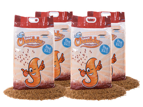 20Kg Chubby Dried Mealworms - Temporarily In Clear Bags
