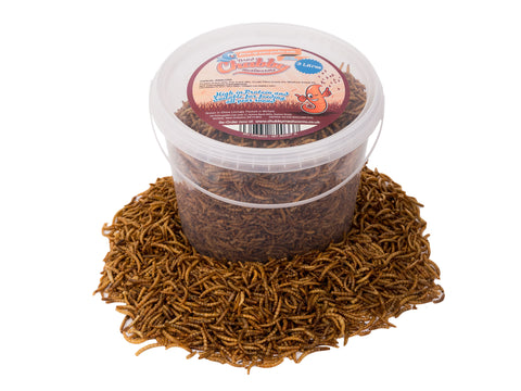 3 Litres Chubby Dried Mealworms