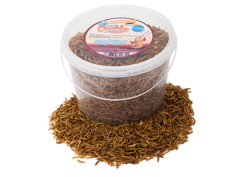 5 Litres Chubby Dried Mealworms