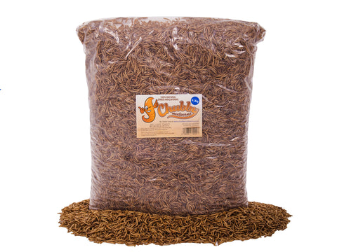 Wholesale Dried Mealworms - 2 Pallets 630Kg (50 x 12.6Kg Boxes)