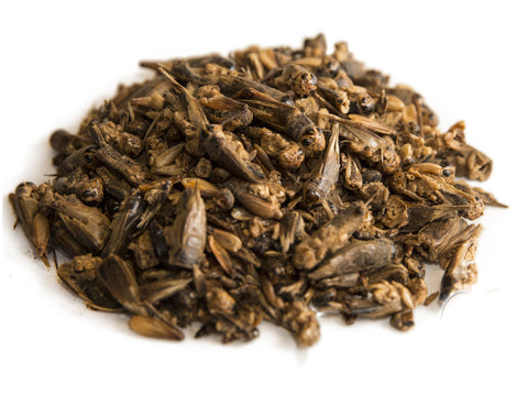 Chubby Dried Crickets  (select your size)