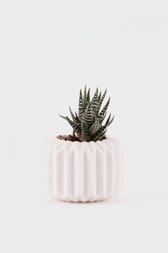 Geo-Fleur Ceramic White Pot Succulent Short -