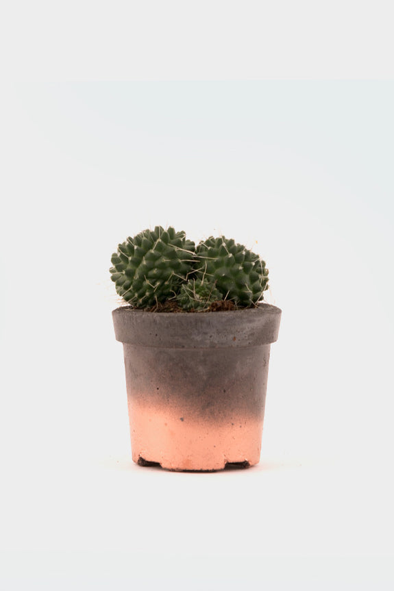Geo-Fleur Mini Concrete Pot Copper Cacti -