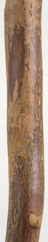 Free Form Sweet Gum Walking Stick