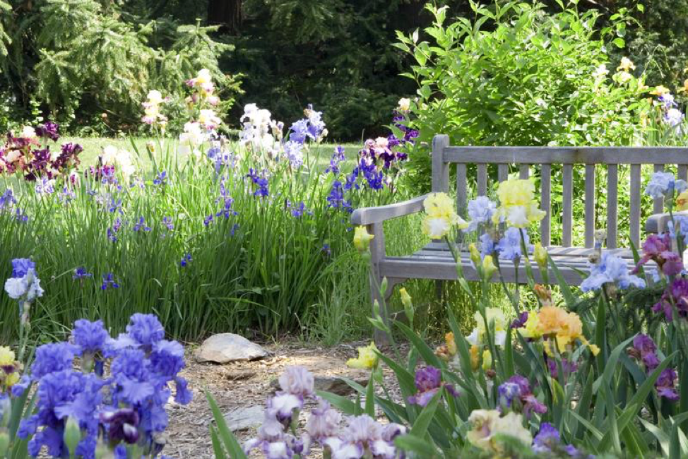 Designing Your Garden? Try These 3 Sources for Inspiration