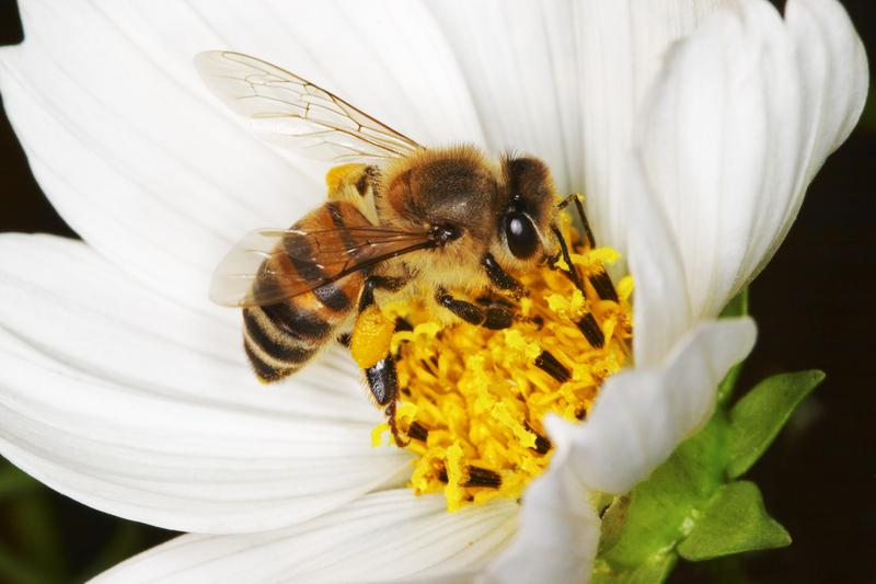 How You Can Attract Honey Bees to Your Garden