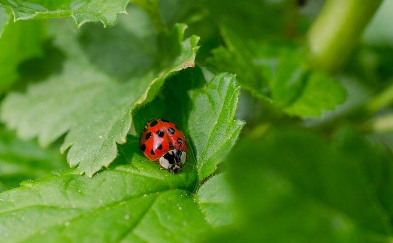 Which Bugs Are Beneficial for Your Garden?