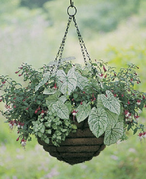 Euro Classic Hanging Basket and Liner Set - Set of 2 Baskets and Liners - Henderson Supply
