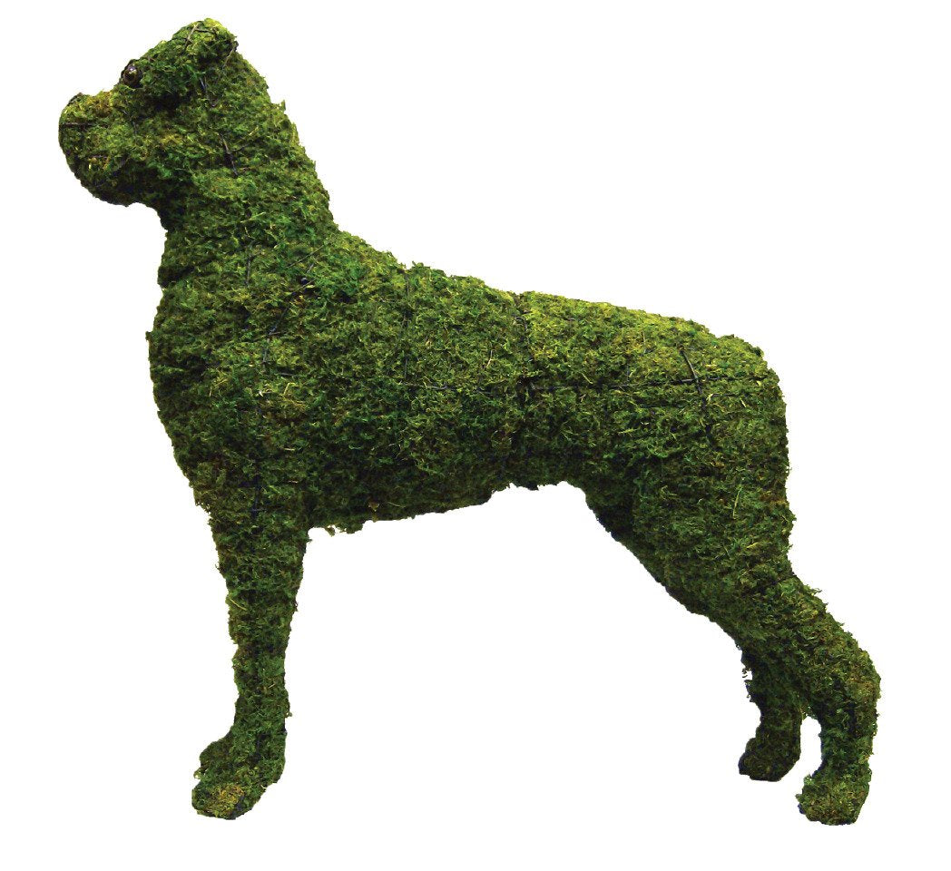 Boxer Rust Free Steel Topiary Filled with Green Dyed Sphagnum Moss - Henderson Garden Supply