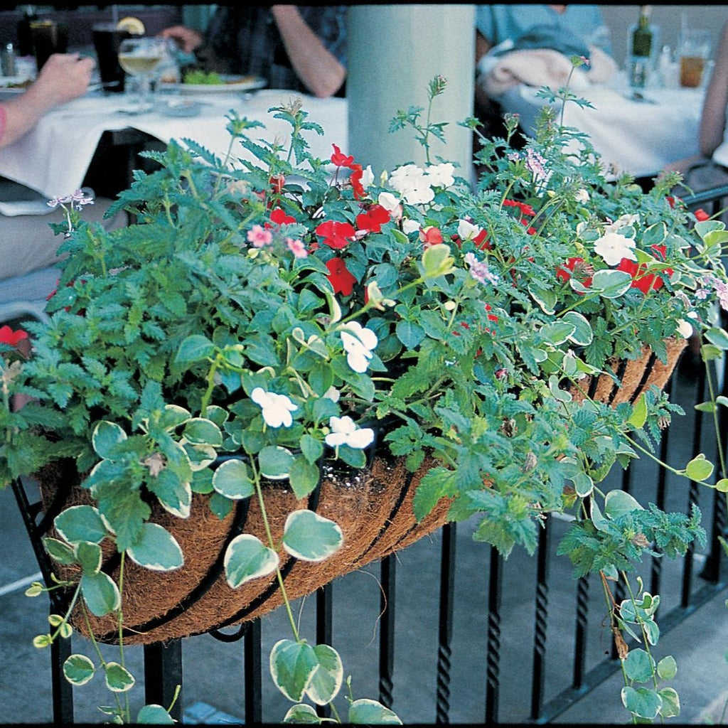 "Hayrack Classic Window Box and Rail Planter 36"" - Henderson Garden Supply"